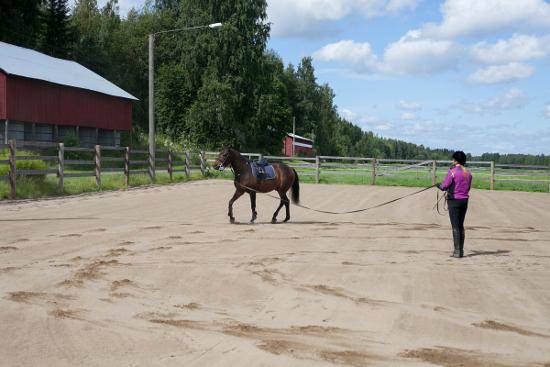 Tallipaikka hevoselle